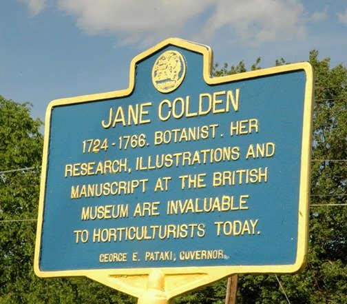 Jane Colden