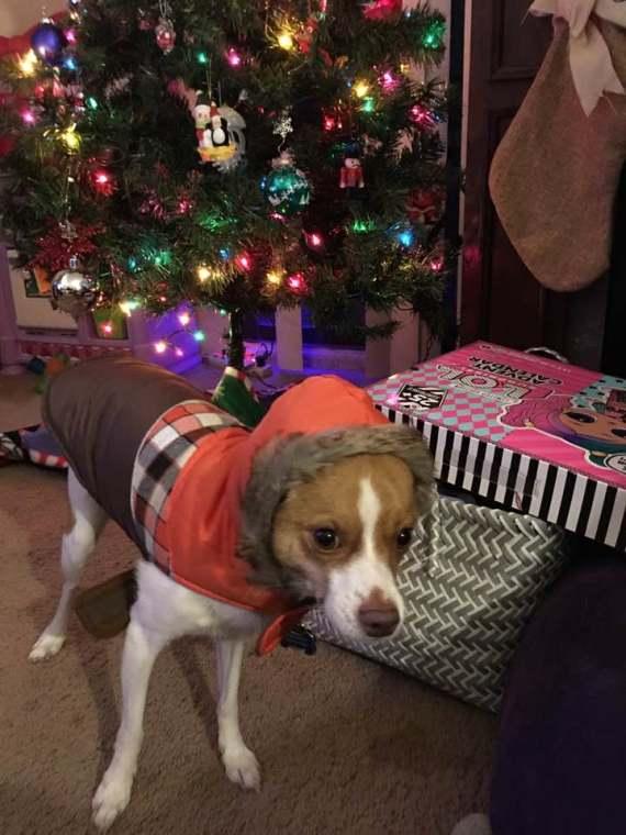 Rudy on Christmas
