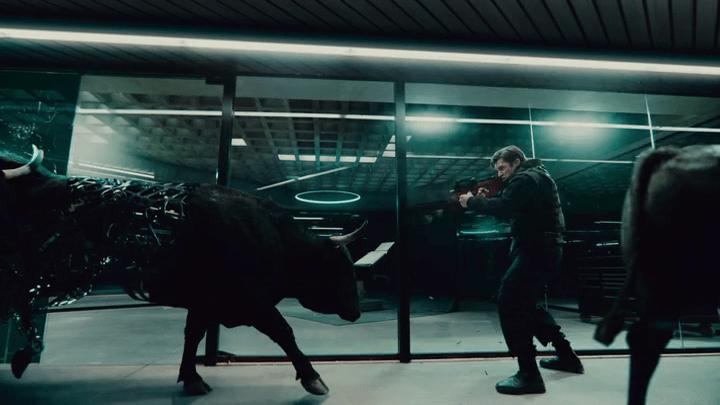 bulls gore QA profile