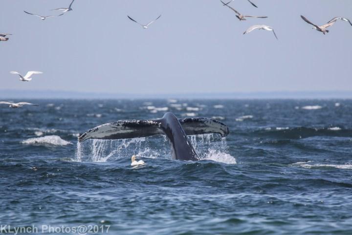 6 WhaleB_67