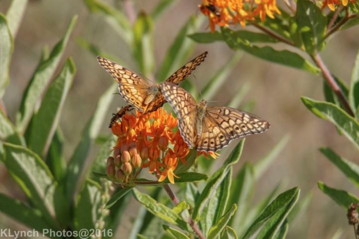 18 butterflies_4