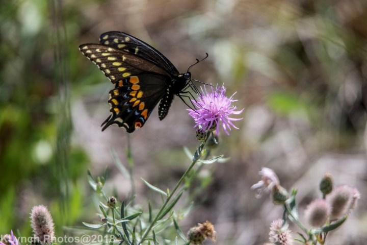 19 Butterfly_5