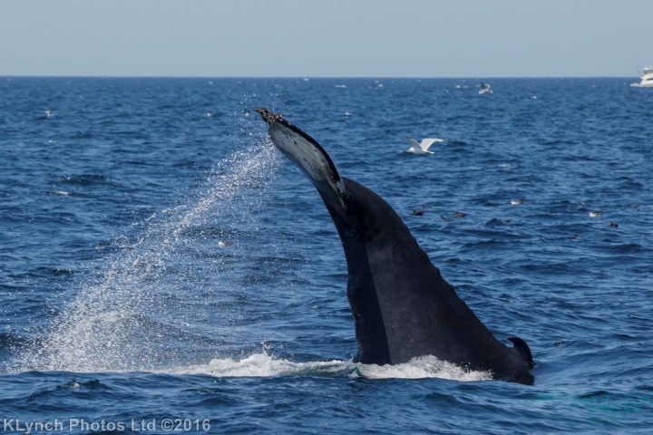07 whales_54 (4)