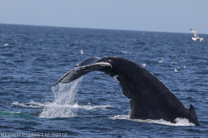 08 whaless_22
