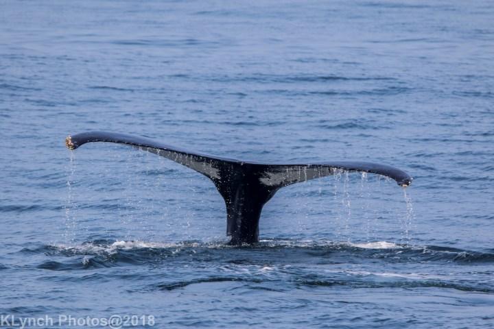 26 Whale_108