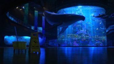 455512-Finding_Dory-Pixar_Animation_Studios-Disney_Pixar-movies-animated_movies-748x421