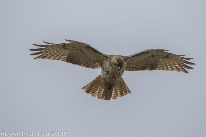 19 Hawk