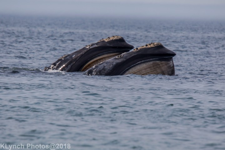 WhaleF_69