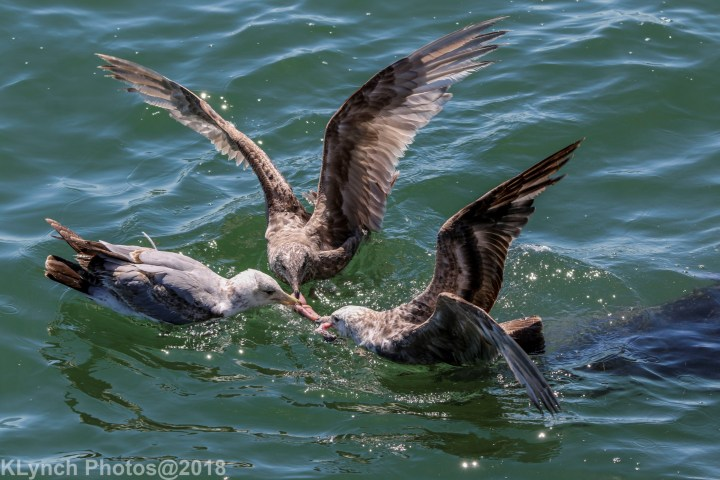 06 gulls