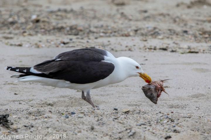 10 gulls