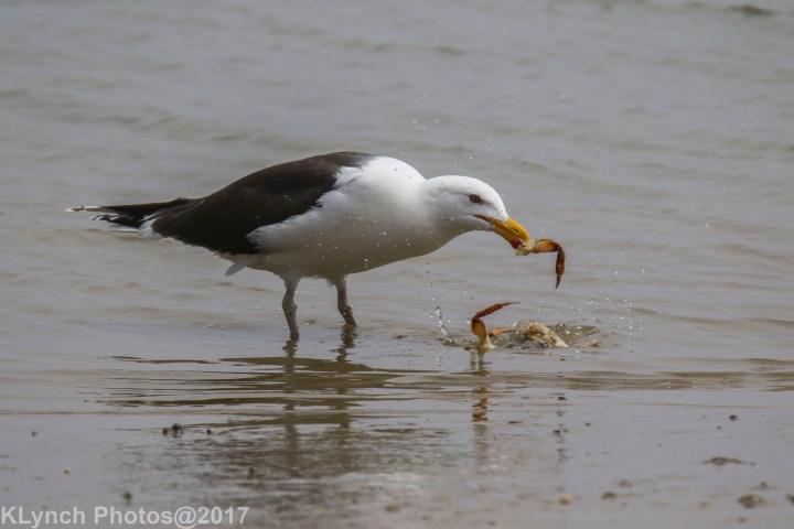 12 gulls