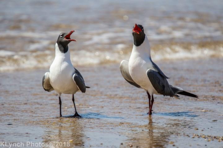 16 Gulls