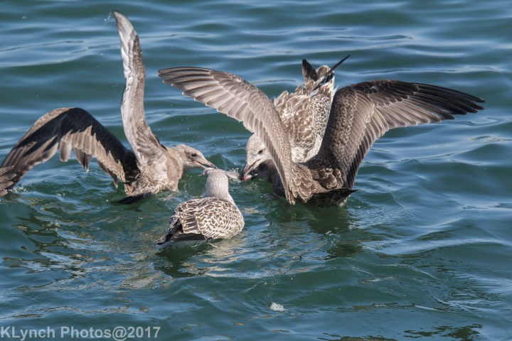 19 Gulls