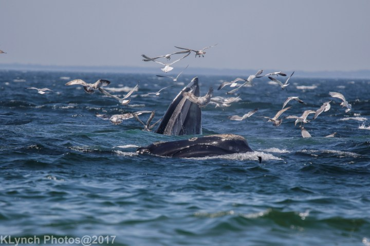 20 whales
