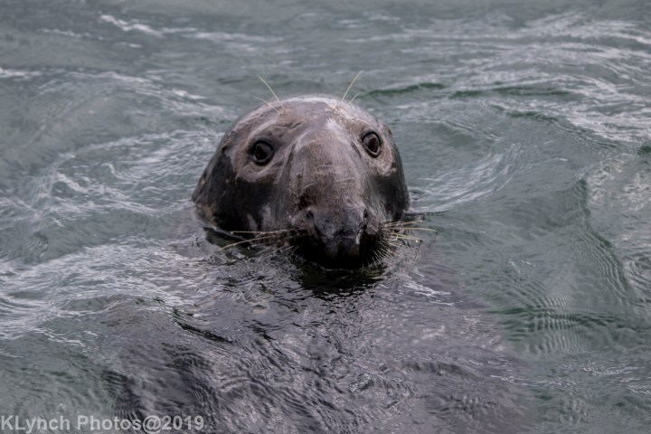 11 seal