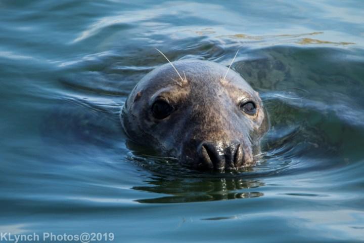 16 seal
