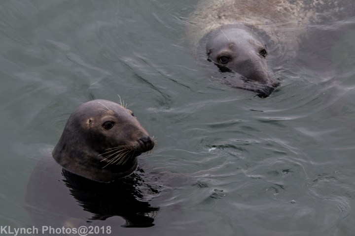 21 seal