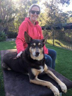 dog treatment, dog osteopathy, wollongong dog treatment