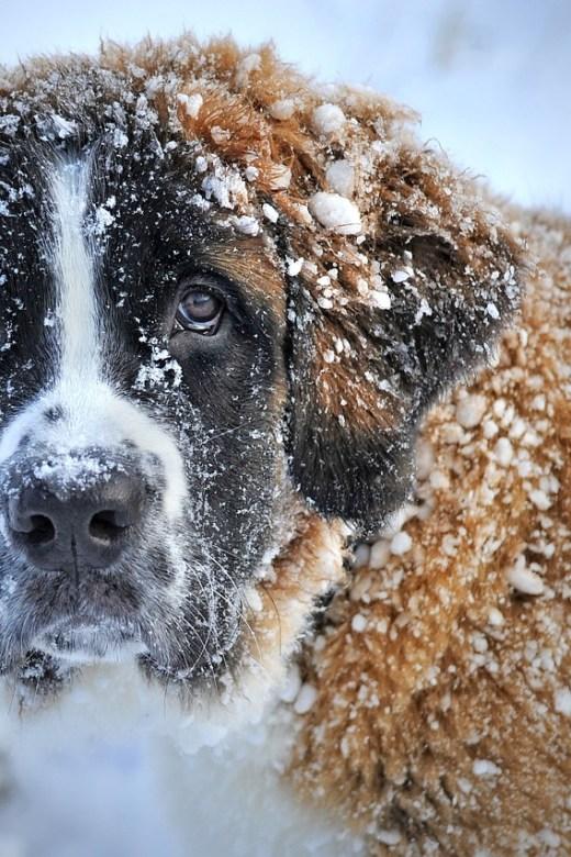 Dog treatment, dog rehab, dog rehabilitation, dog osteopathy, dog ice therapy