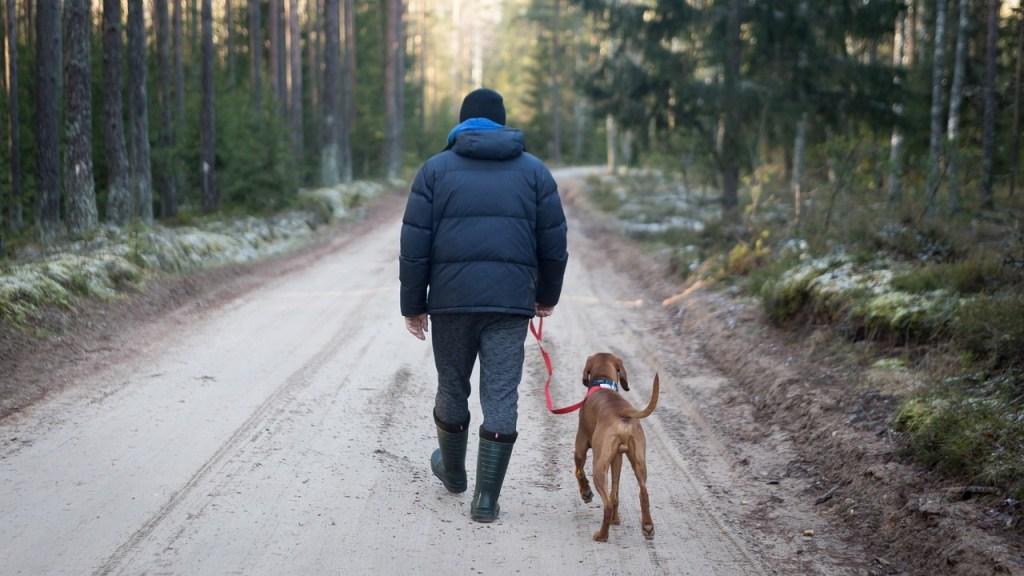 Leash walking dog, dog rehab, dog rehabilitation, dog treatment