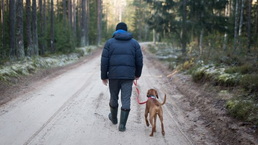 dog walking, leash walk, dog rehab, dog rehabilitation