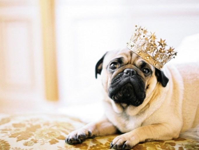 Пушистые гости: 24 лучших свадебных фотографии с животными