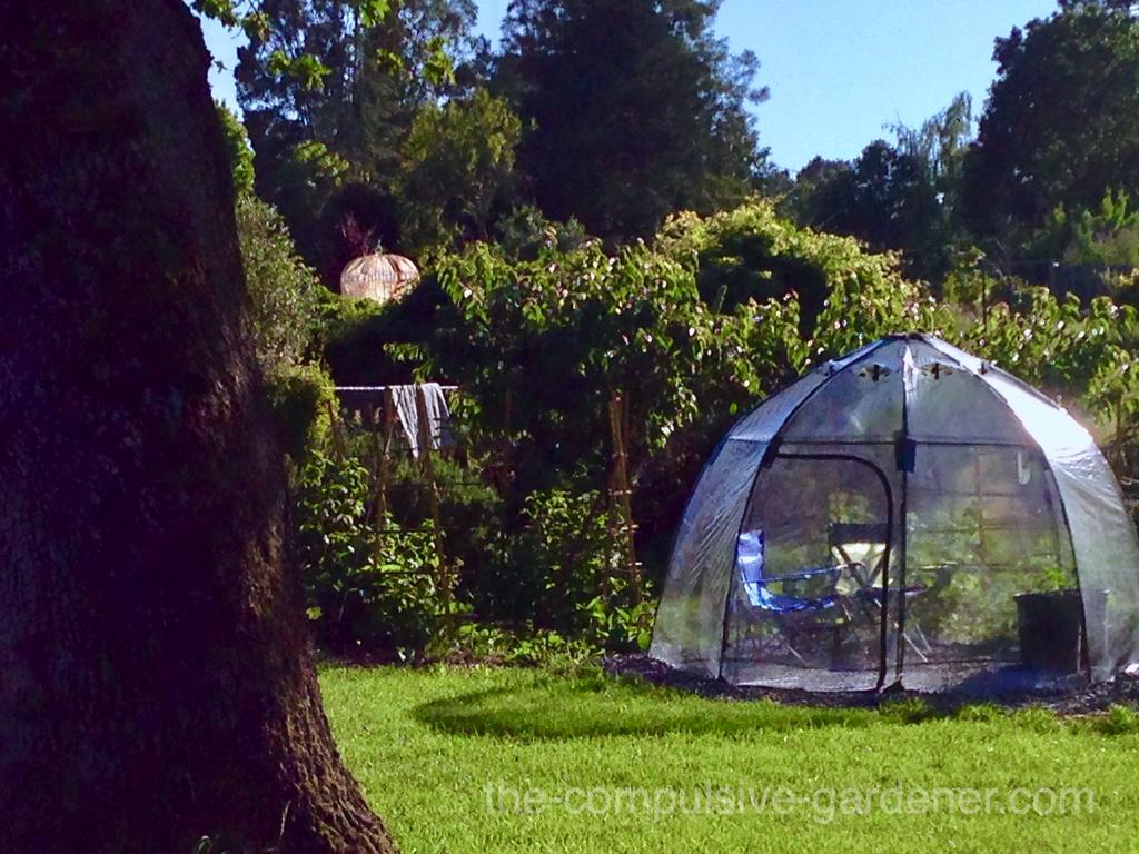 Sunbubble in summer