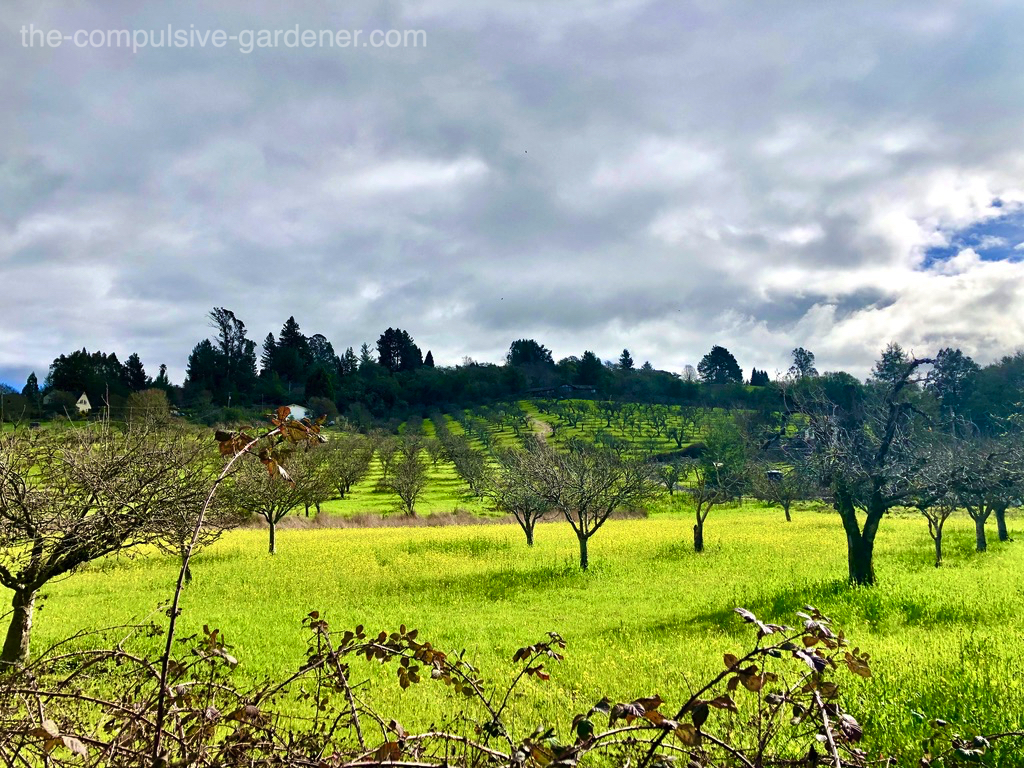 Sonoma County apple orchards