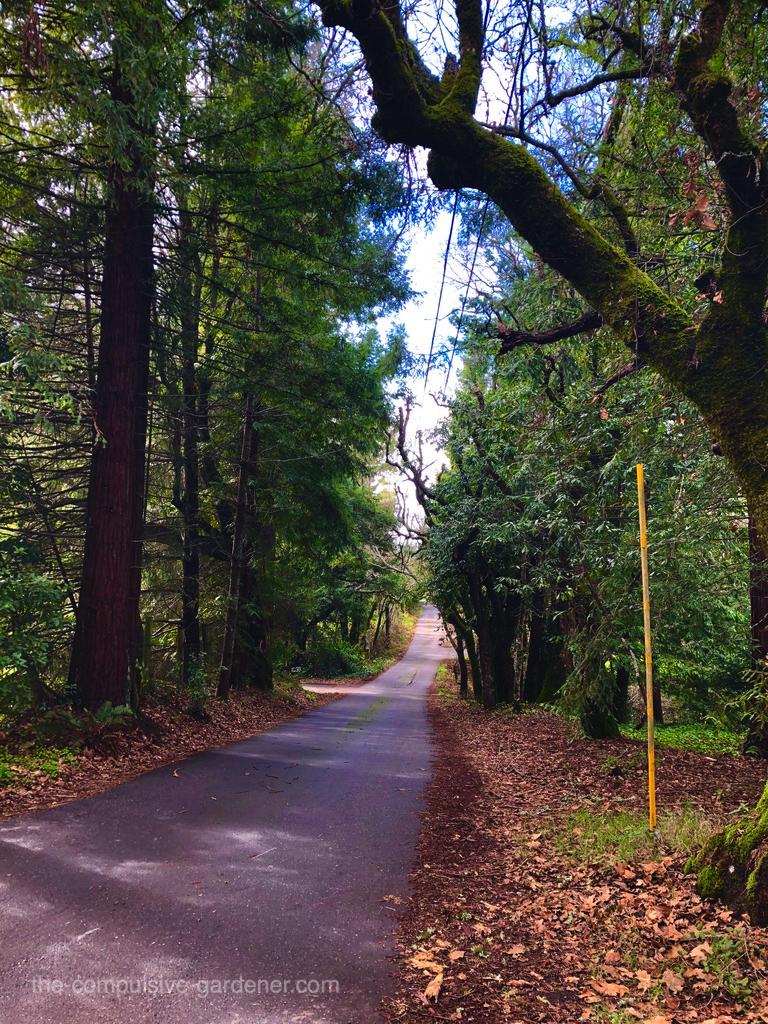 A quiet shady road in SoCo.