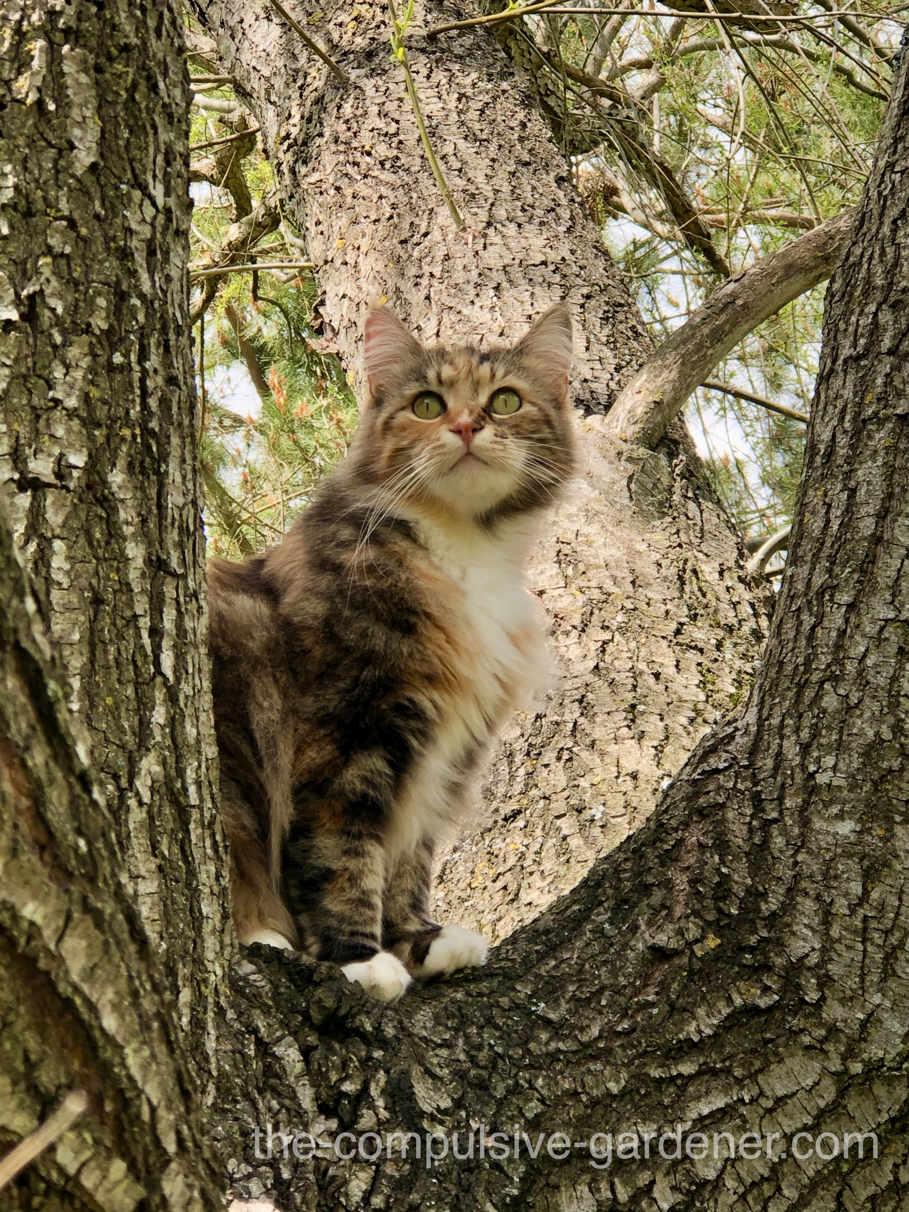Puffball Kitty in Willow Tree