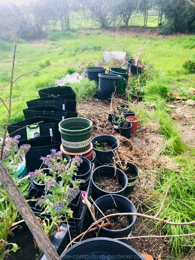 Our garden nursery is getting a clearing out. Propagated shrubs have been transplanted.