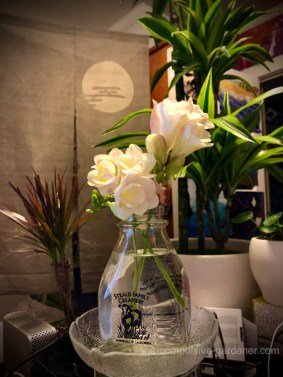 Freesias in an old milk jar in my office, keeping me company while I write the garden blog