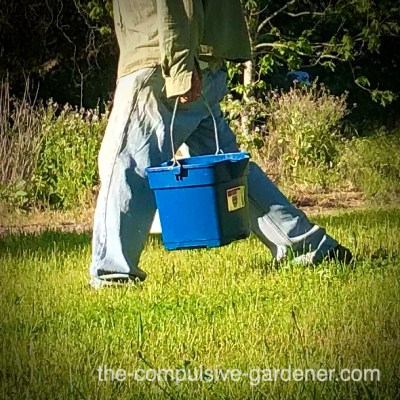 The Summer of Buckets !
