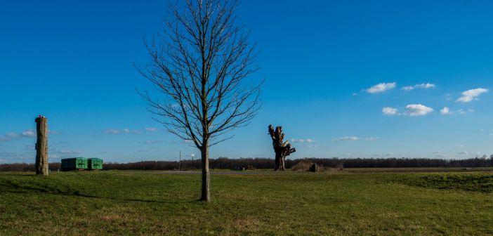 Der Stamm der berühmten Himmelgeister Kastanie und der neu gepflanzte Baum (Foto: Hajo Kendelbacher)