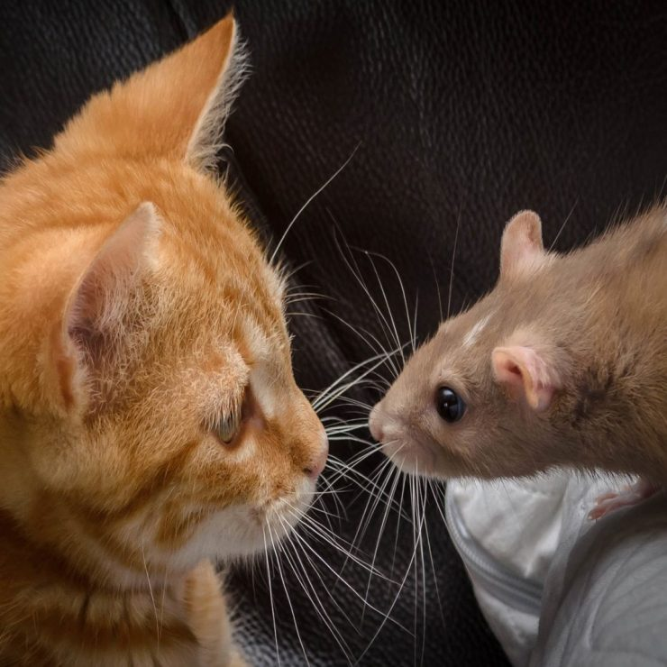 The Darknet Cat and Mouse Game: Law Enforcement Gains More Traction