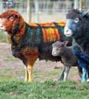 Pampered sheeple