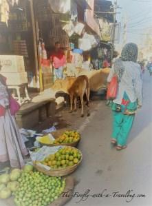 hectic India