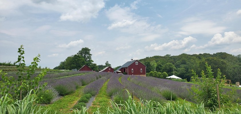 Star Bright Farms