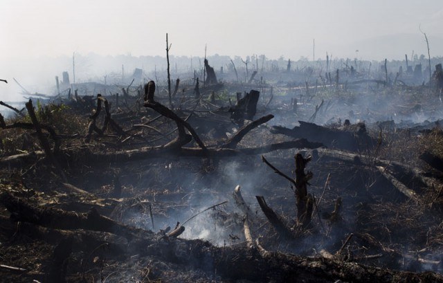 Tripa's peat forest being burnt to make way for palm oil plantantions, 13 June 2012, Aceh province, Sumatra, Indonesia ( licence )
