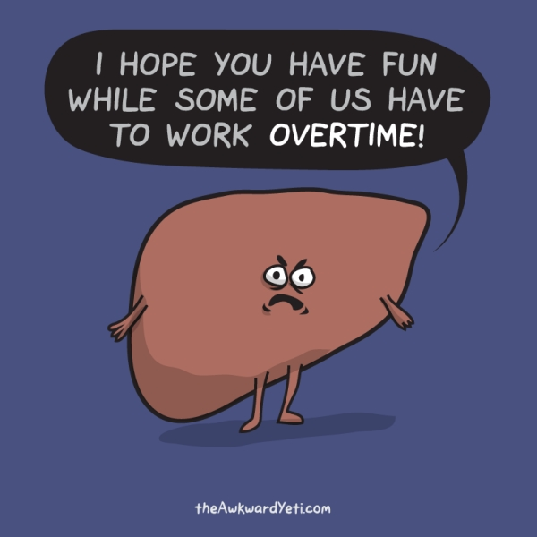 Our liver is a critical organ for metabolism and also protects us from toxic substances such as caffeine, alcohol, and other drugs. Image credit: The Awkward Yeti, http://theawkwardyeti.com/