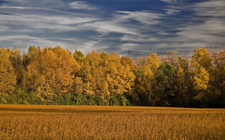 A cornfield in Ann Arbor, Michigan, during autumn. Image credit: IShutterToThink via Flickr (CC by 2.0 license)