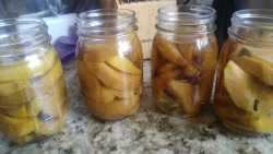 Peaches Preserved in Vodka
