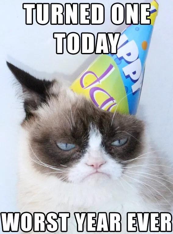 Happy Birthday Grumpy Cat The Hollywood Gossip