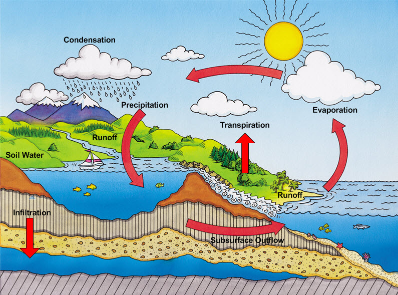 the water cycle the
