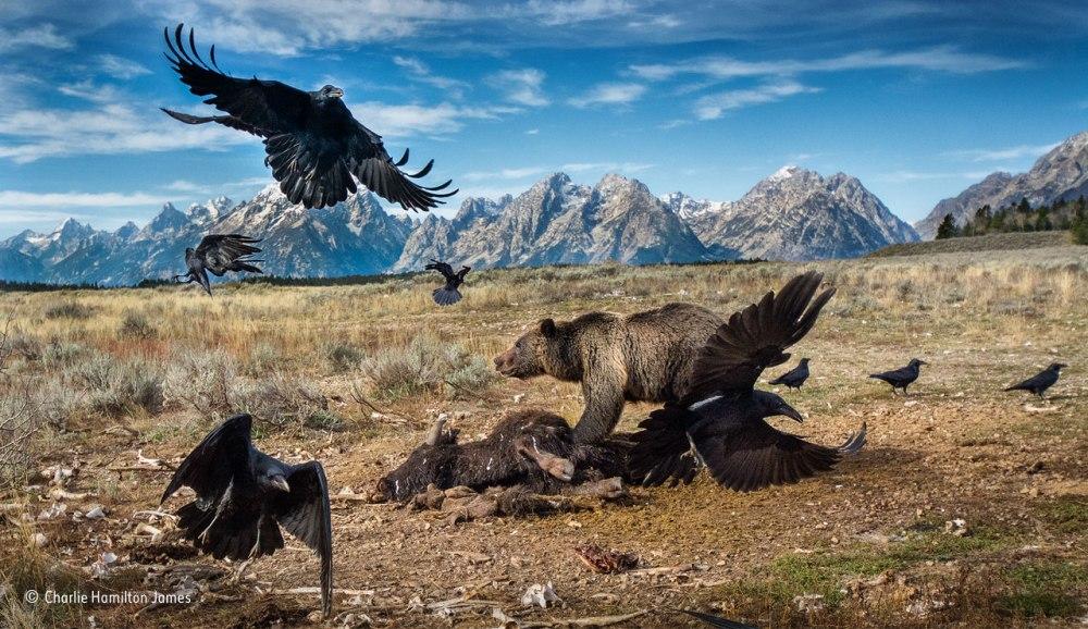 Mammals Finalist © Charlie Hamilton James / Wildlife Photographer Of The Year