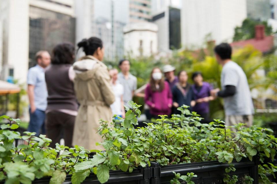 Urban farming workshops. © Xaume Olleros