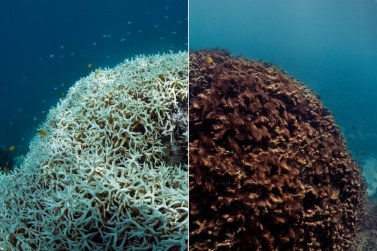 Before/After. © The Ocean Agency/XL Catlin Seaview Survey/Richard Vevers & Christophe Bailhache.
