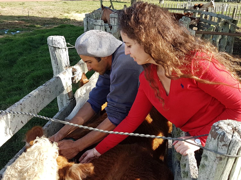 ChipSafer cattle INKLINE.jpg