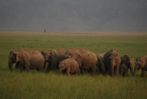 Indian railways launch plan to protect elephants
