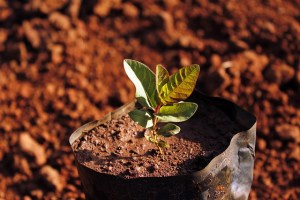 Ethiopia planted over 350 million trees in 12 hours